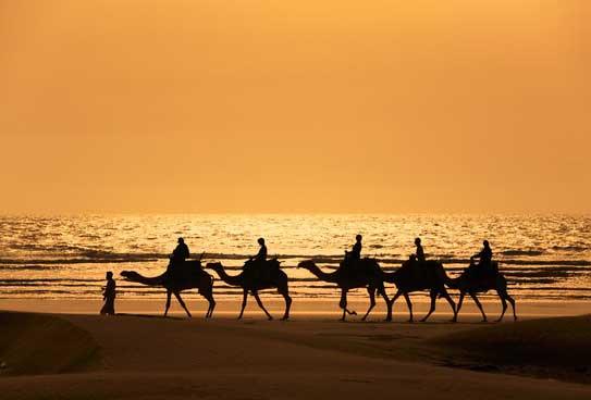 Camel riding travel insurance
